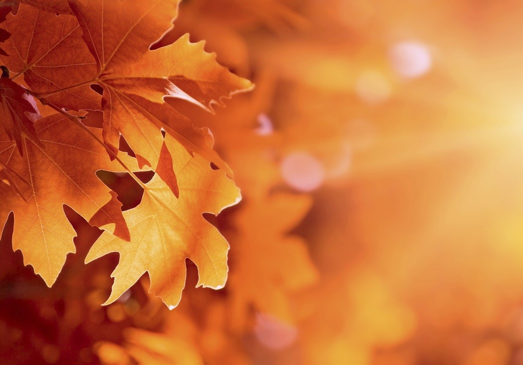 Why Do Leaves Change Colors In The Fall Jstor Daily