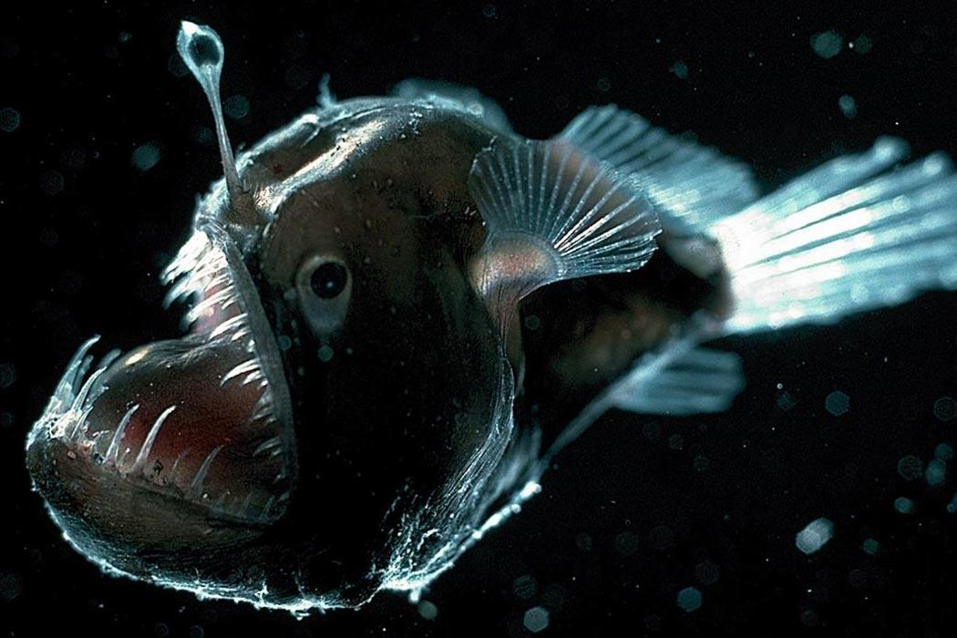 anglerfish on flipboard, Reel Combo