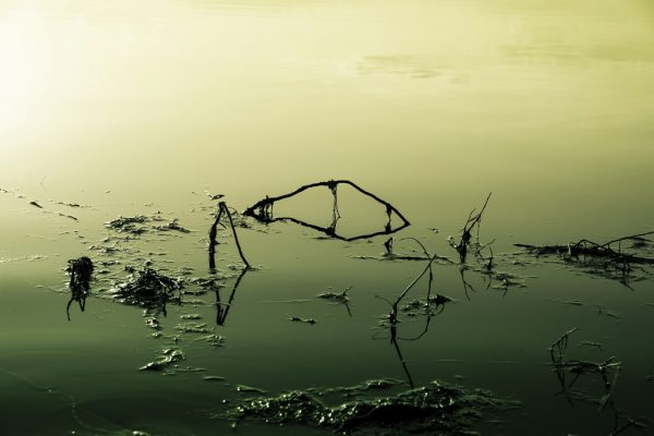 lake that is poisoned and polluted