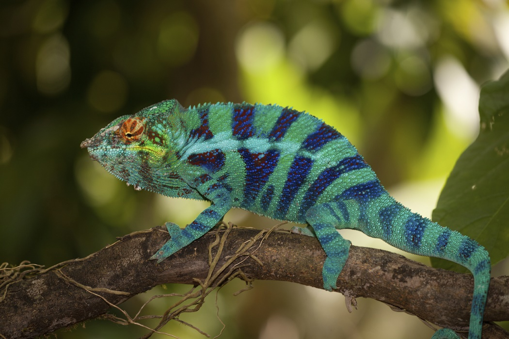 Move Over Camouflage Here Comes Artificial Chameleon