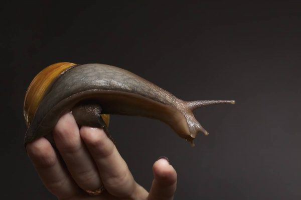 snail on a female hand on a black background