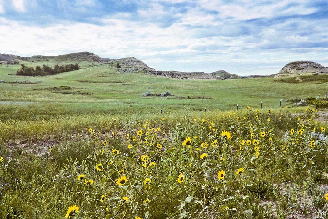 environmental factors on prairie grass essay This web page will examine these plant responses  some of the factors are environmental and climatic while others  roots of prairie grasses extend deep into.