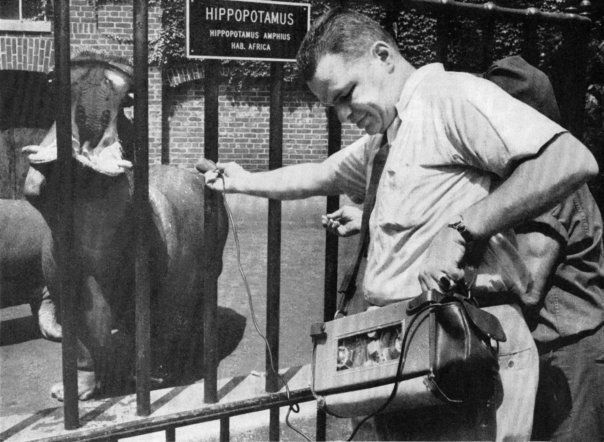Tony Schwartz records a hippo in the Central Park Zoo. New York, NY