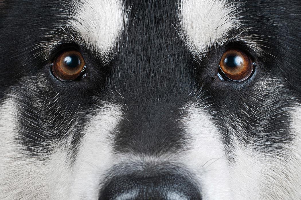 Dog_1050x700