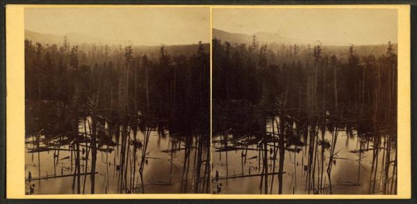 Pine forrest [sic], Summit Station, Catawissa R.R. Photo by John Moran