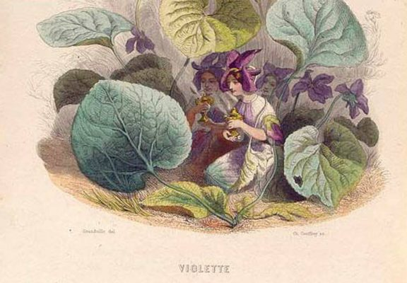 Violette Personified NYPL Collections