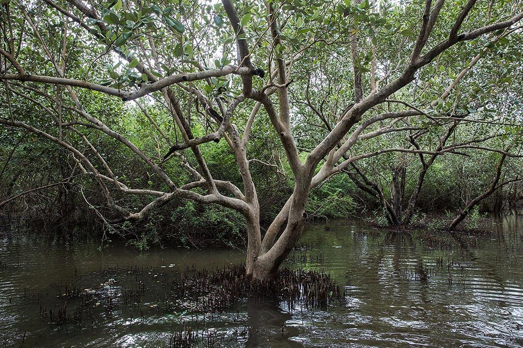 why should we protect the mangrove (why do we need to protect the mangroves) - para makasuporta dito sa amin ( to support us) 2 - pag maraming bakhaw, maraming isda (if there are many mangroves, there would be many fish) - para din sa amin, sa kinabukasan ng anak naming (for us and the future of our children) these are some of the words of the.