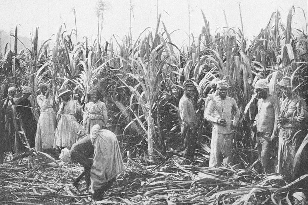 "Schomburg Center for Research in Black Culture, Jean Blackwell Hutson Research and Reference Division, The New York Public Library. ""Sugar cane plantation; [Jamaica.]"" New York Public Library Digital Collections. Accessed April 27, 2016. http://digitalcollections.nypl.org/items/510d47df-94a7-a3d9-e040-e00a18064a99"