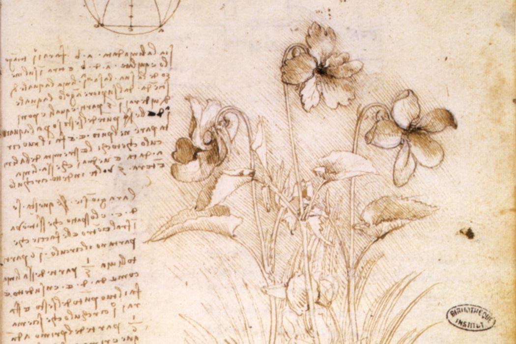 Leonardo da Vinci botanical study, circa 1490