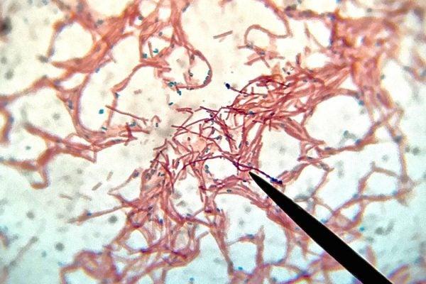 Microbiome_1050x700