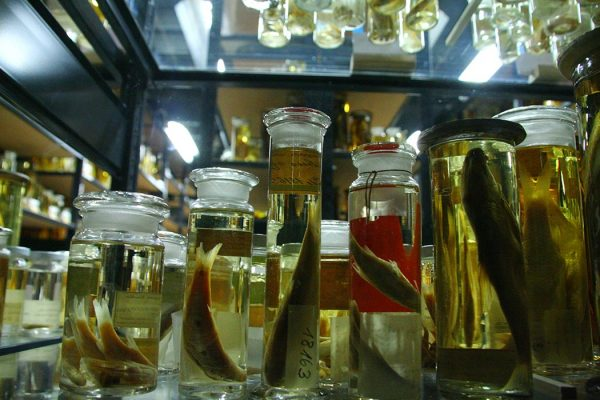 Science jars of formalin and fish