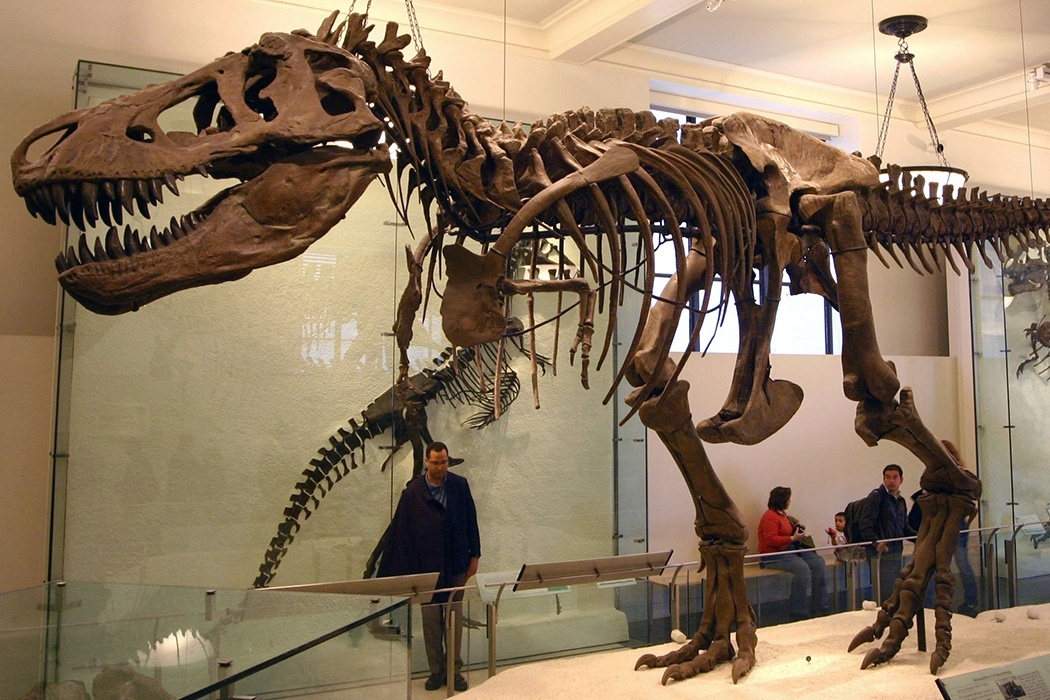 Tyrannosaurus rex skeleton (the specimen AMNH 5027) at American Museum of Natural History.