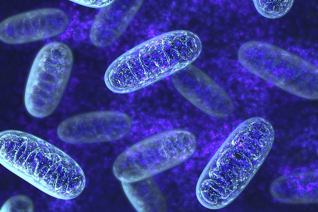 Who Needs Mitochondria Anyway? | JSTOR Daily