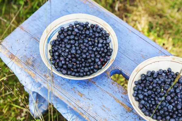 Photograph: Blueberries in dishes.