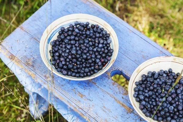 Freshly picked tasty sun-ripened blueberries in ceramic bowl on a blue stool outside.