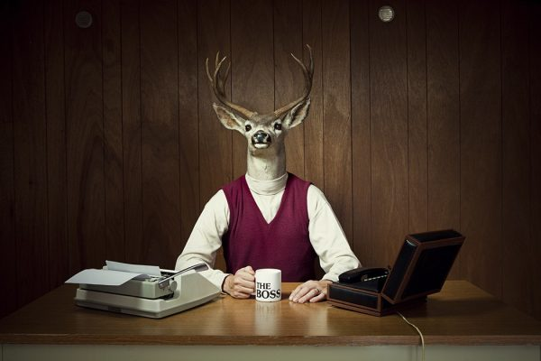 "A retro business man with the head of a deer / stag sits in his vintage wood paneled 1970's style office, holding a mug that says ""The Boss"".  Complete with box phone and typewriter.  Horizontal with copy space.  [url=http://www.istockphoto.com/file_search.php?action=file&lightboxID=13702551][IMG]http://i186.photobucket.com/albums/x196/hybridsoul2/FunnyBus_zps7ee3b80a.jpg[/IMG][/URL]  [url=http://www.istockphoto.com/file_search.php?action=file&lightboxID=7314982][IMG]http://i186.photobucket.com/albums/x196/hybridsoul2/DeerHeadBanner.jpg[/IMG][/url]"