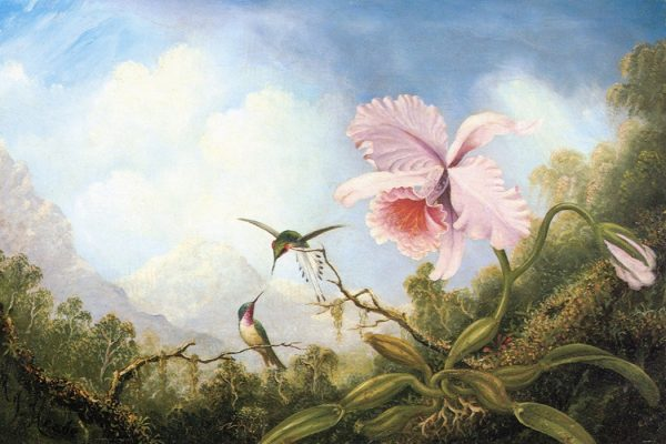Two Hummingbirds and an Orchid