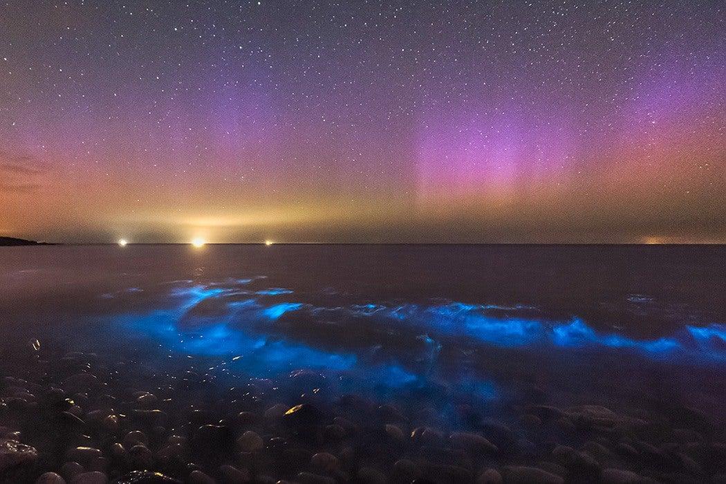 Bioluminescent ocean