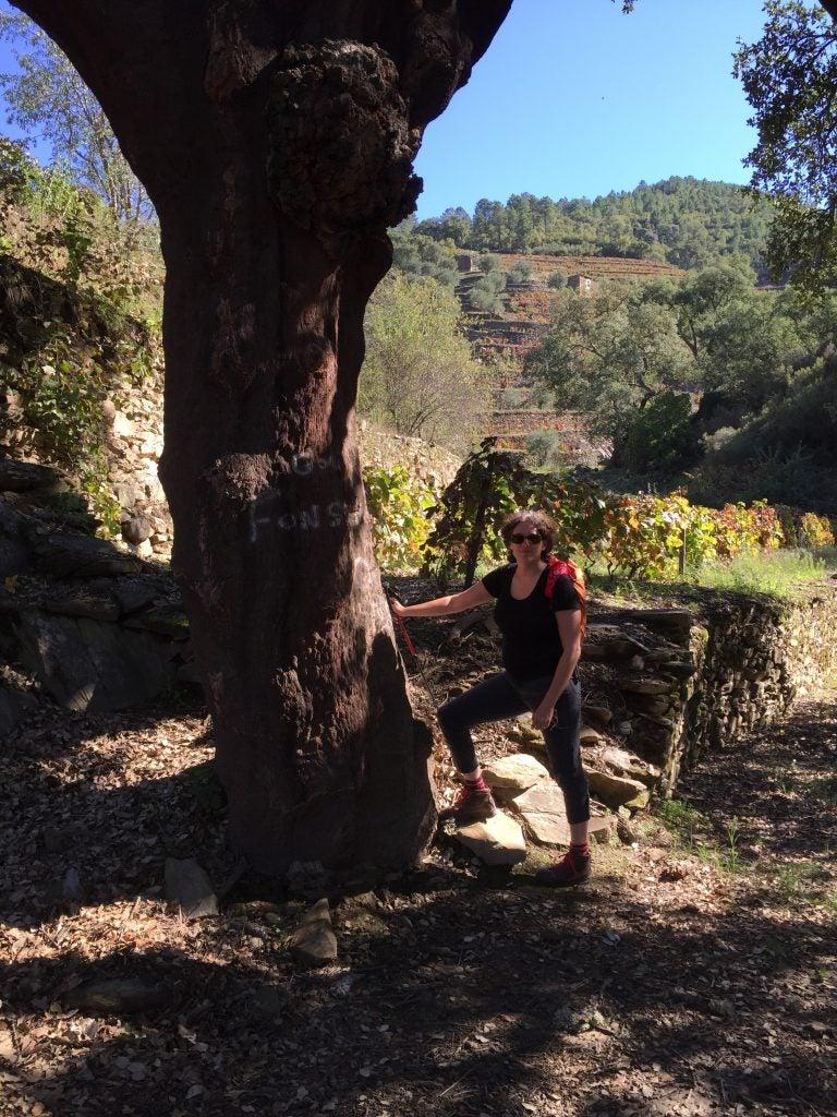 cork-oak-portugal