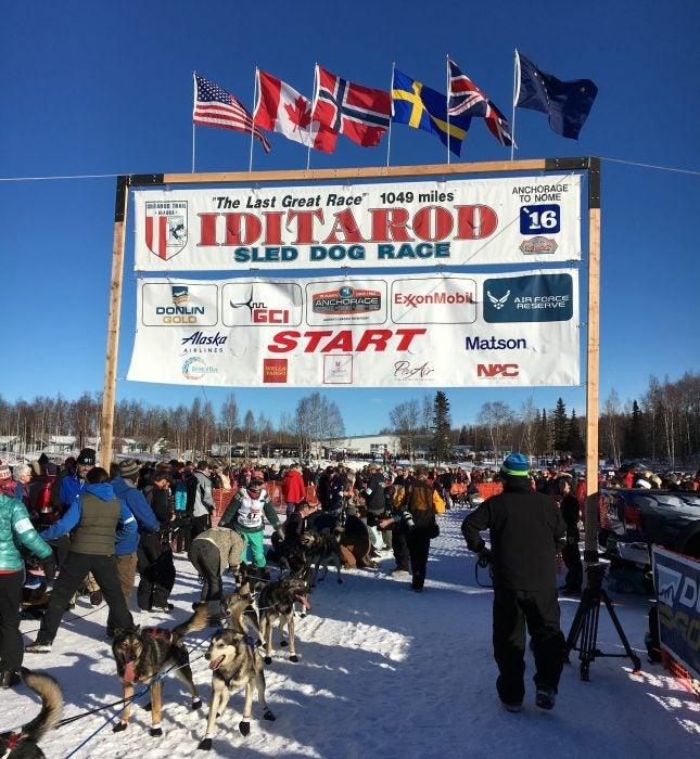 Iditarod starting line