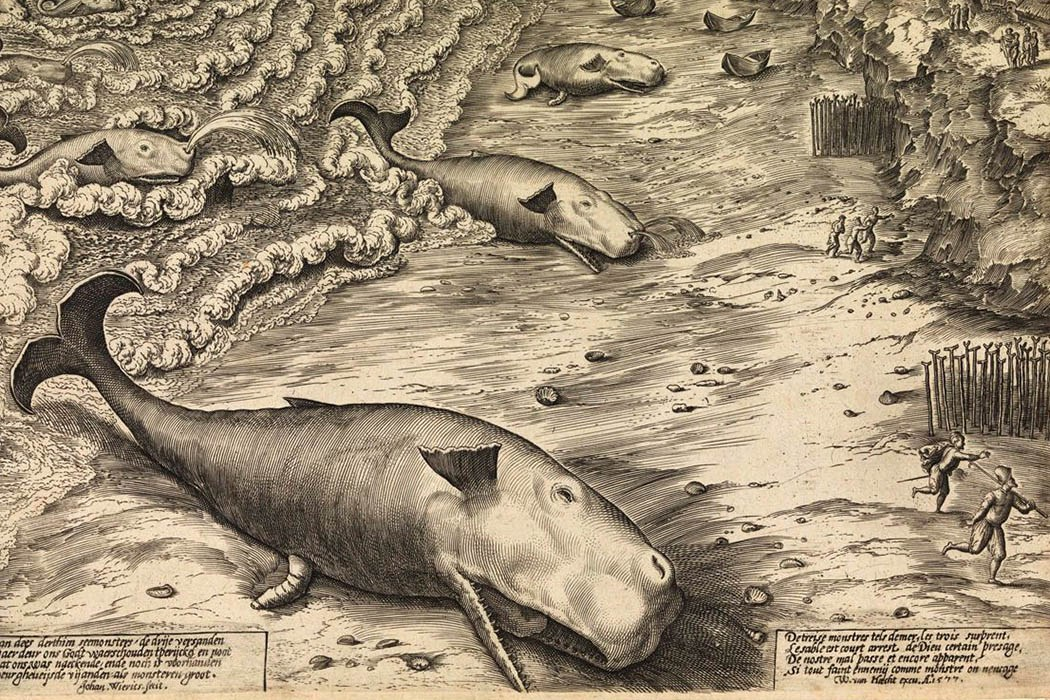 Beached whales engraving