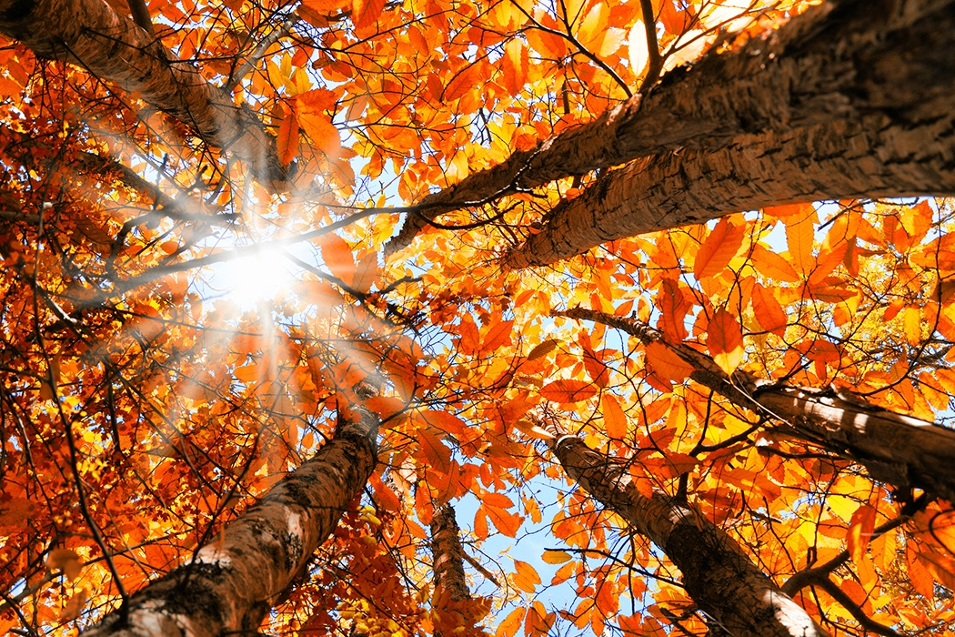nature poems orange foliage