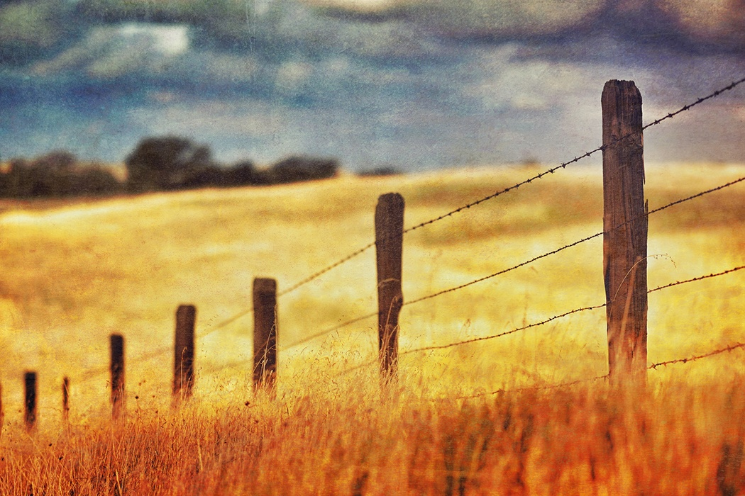 a9806db4a0b How Barbed Wire Changed Farming Forever