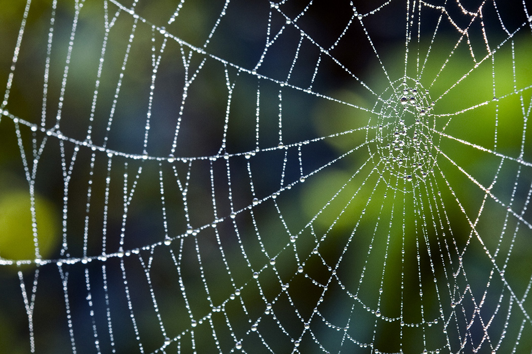 Spiders Seem To Be Getting More >> Six Surprising Facts About Spiderwebs Jstor Daily
