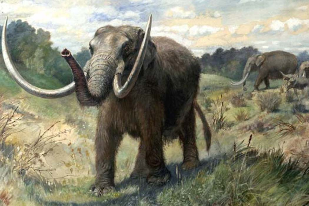 Restoration of an American mastodon herd by Charles R. Knight
