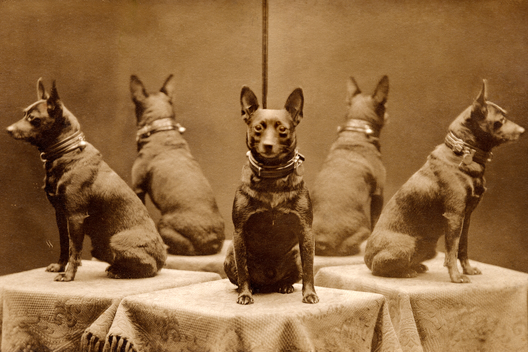 Victorian era dog