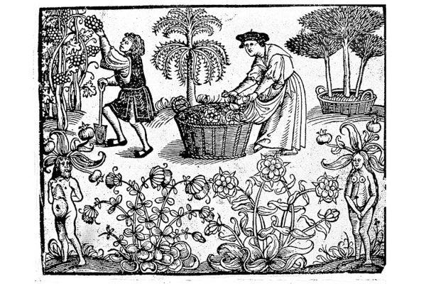 English Herbarium