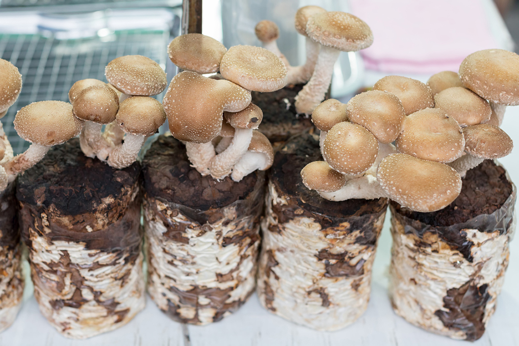 Company Uses Mushrooms to Grow Plastic Alternatives | JSTOR