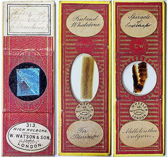 Victorian microscope slides