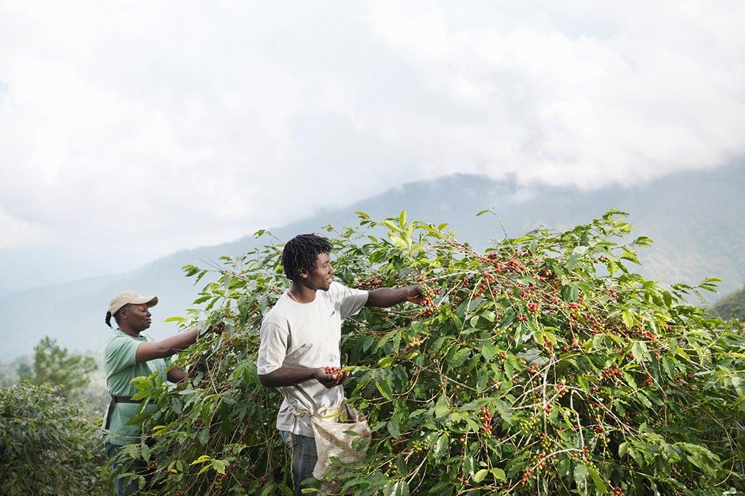 Coffee beans biodiversity