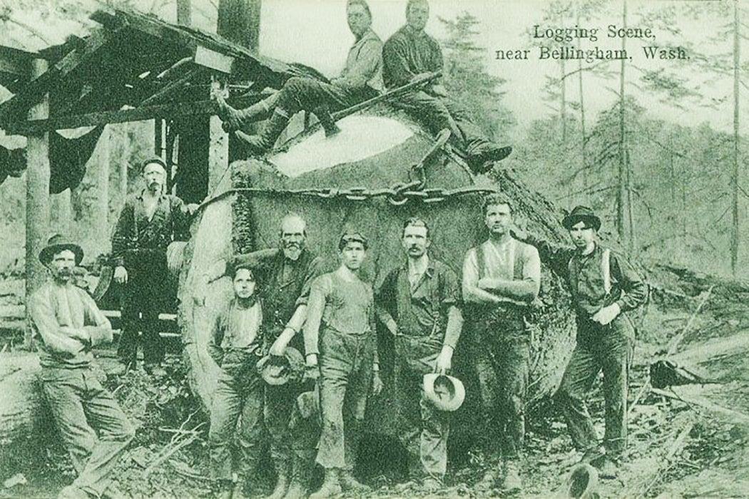Loggers slang
