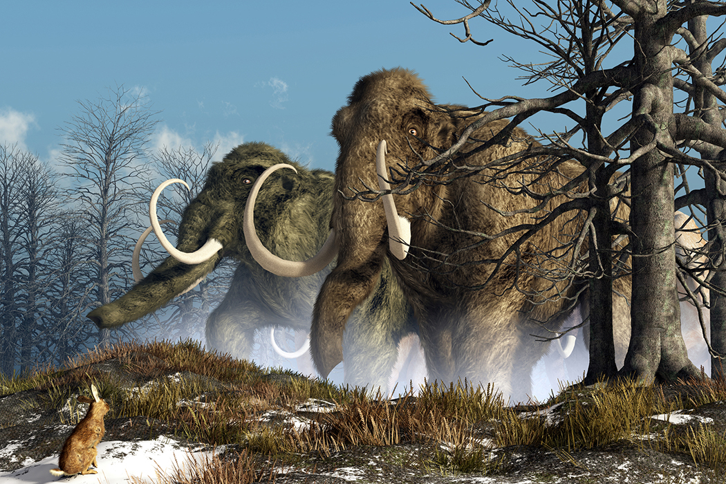 herd of mammoths