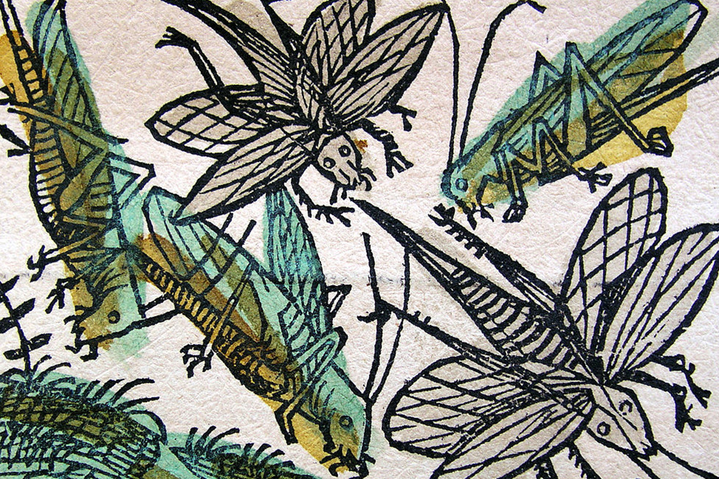 Nuremberg locusts