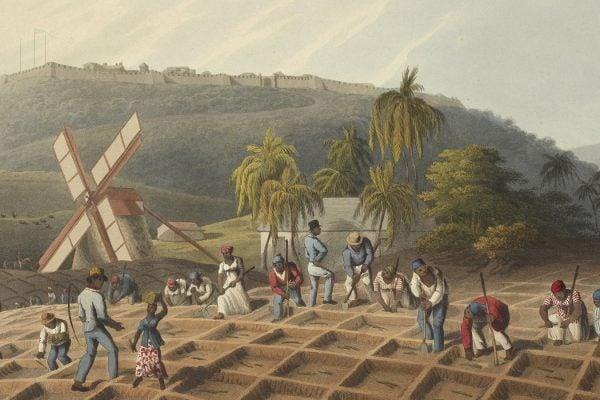 Antigua sugar cane slavery