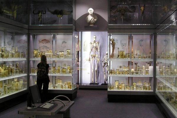 Charles Byrne skeleton