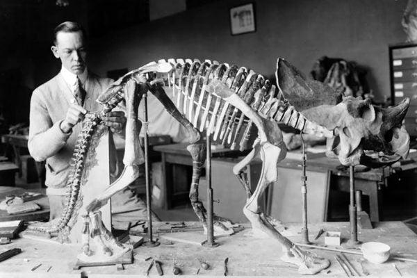Paleontologist dinosaur bones