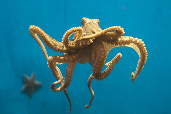 Octopus Swimming In Sea