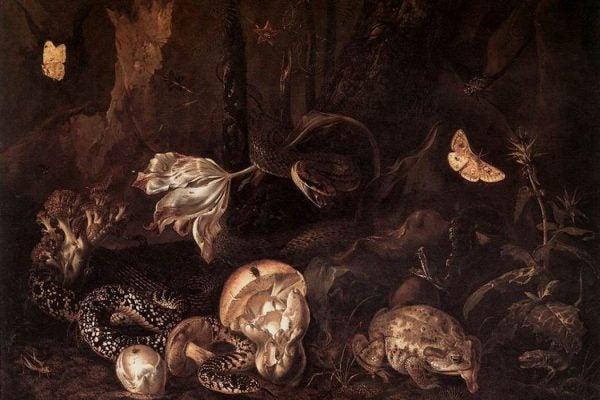 Otto Marseus van Schrieck - Stilleben mit Insekten und Amphibien, 1662