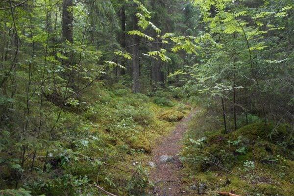 A trail near Tampere, Finland.