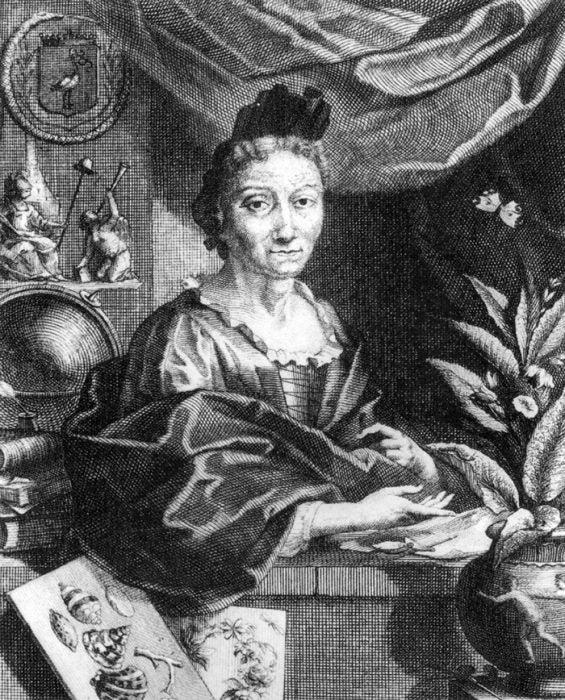 Portrait of Maria Sibylla Merian
