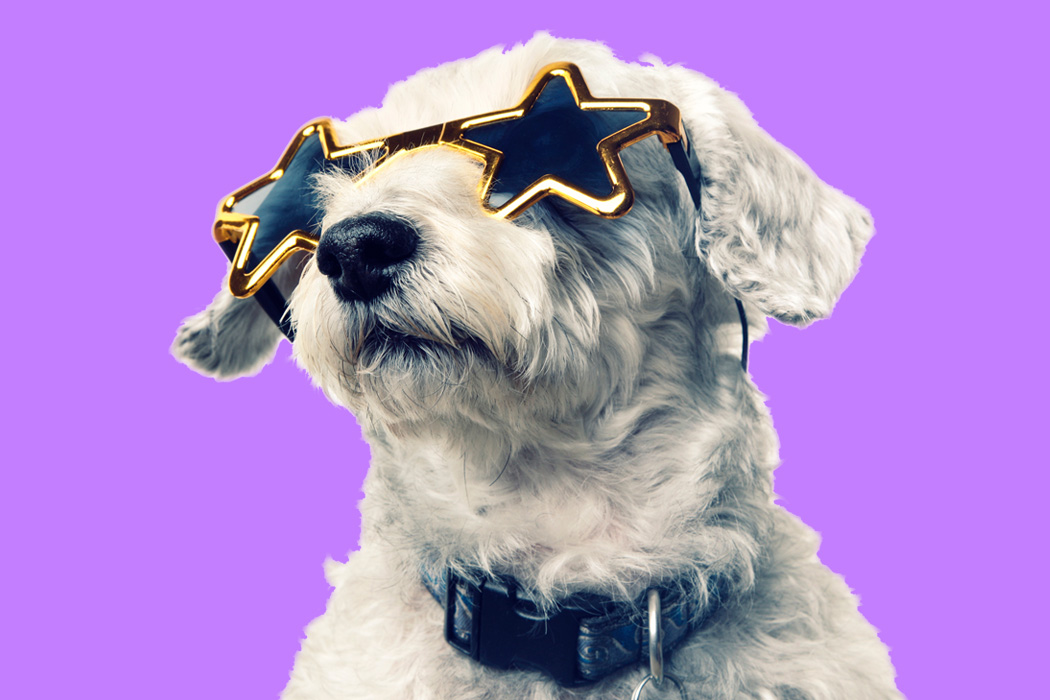 A dog wearing sunglasses.