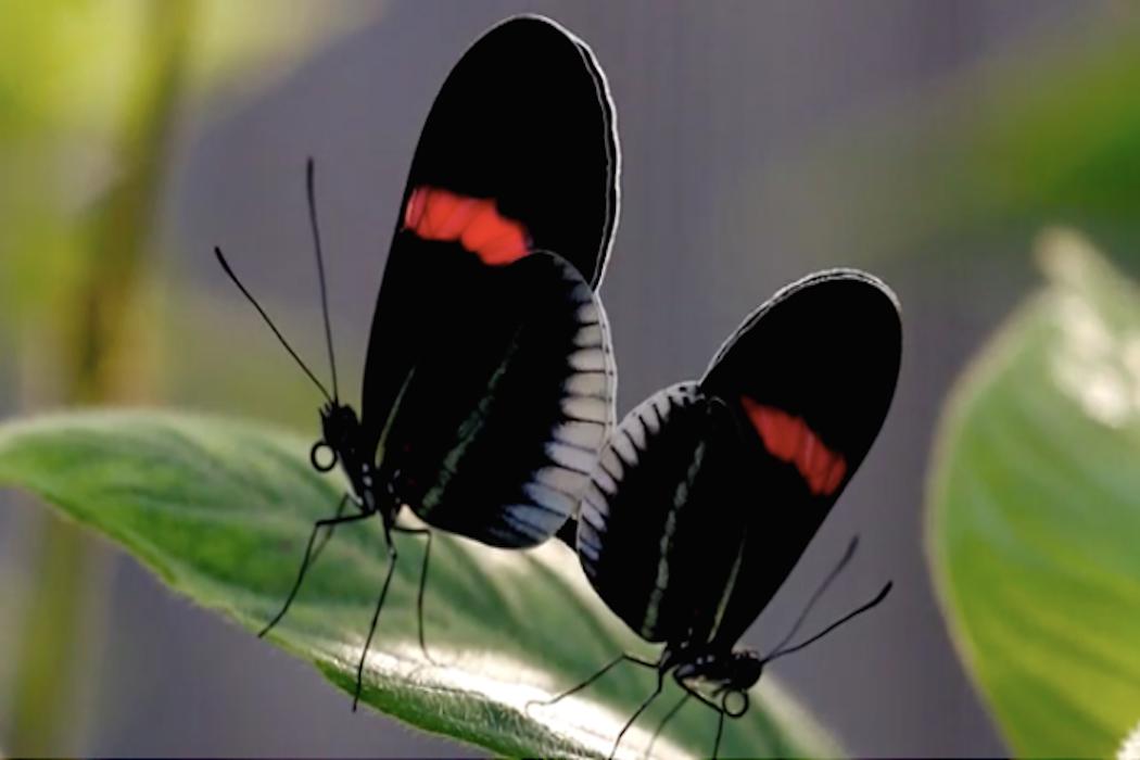 Butterflies sex, wizards of waverly place sex pics