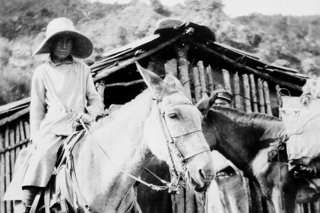Mary Agnes Chase collecting plants in Brazil in 1929.