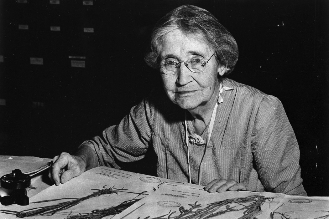 Mary Agnes Chase sitting at desk with specimens