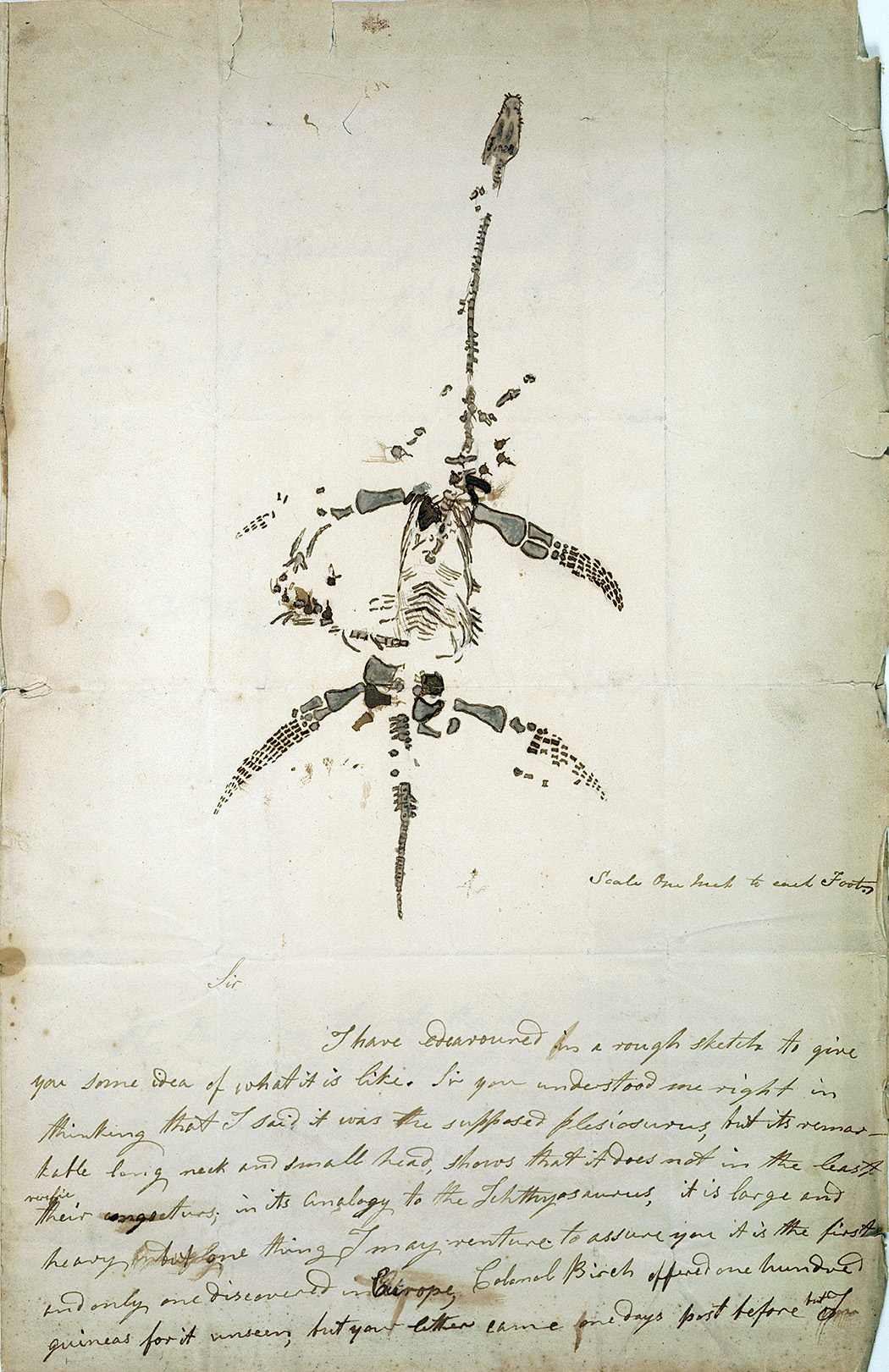 Letter concerning the discovery of plesiosaurus, from Mary Anning