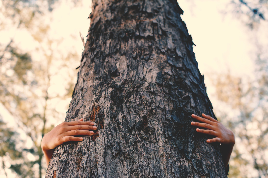 A person hugging a tree trunk